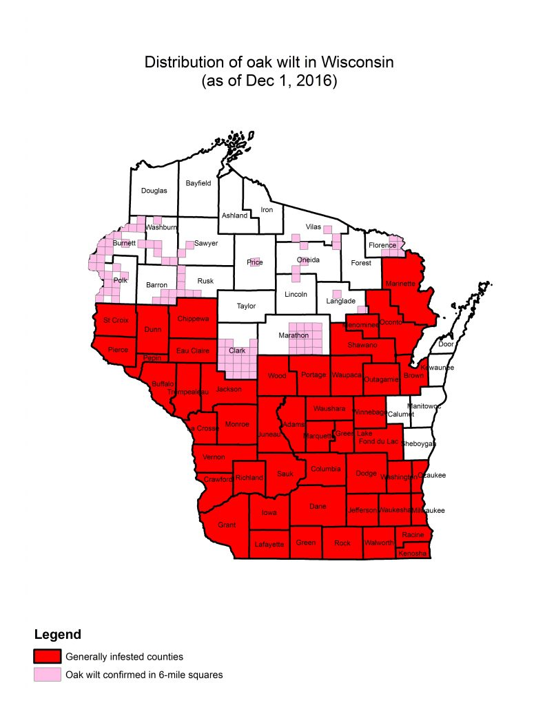 This map shows the known distribution of oak wilt in Wisconsin by county and townships as of December 1, 2016.