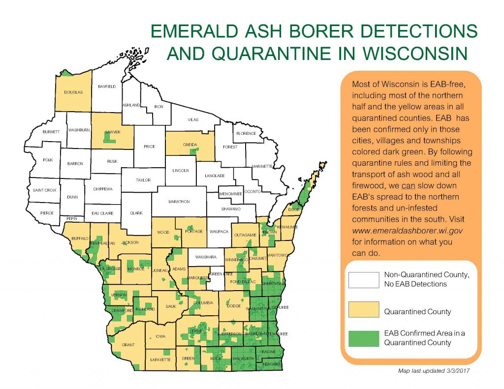 EAB quarantine map. Counties shaded in tan are quarantined for EAB, and includes much of the southern half of Wisconsin, as well as other counties. Areas shaded in green are the townships and municipalities where EAB has actually been identified, and shows that not all counties that are quarantined are fully infested.