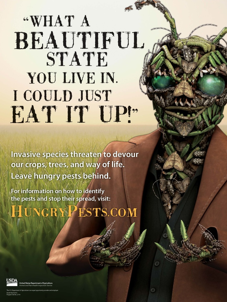 Vin Vasive is the spokesman for invasive insects at USDA APHIS. He is made up of invasive species. This USDA APHIS poster was designed by Deb Levy Creative.