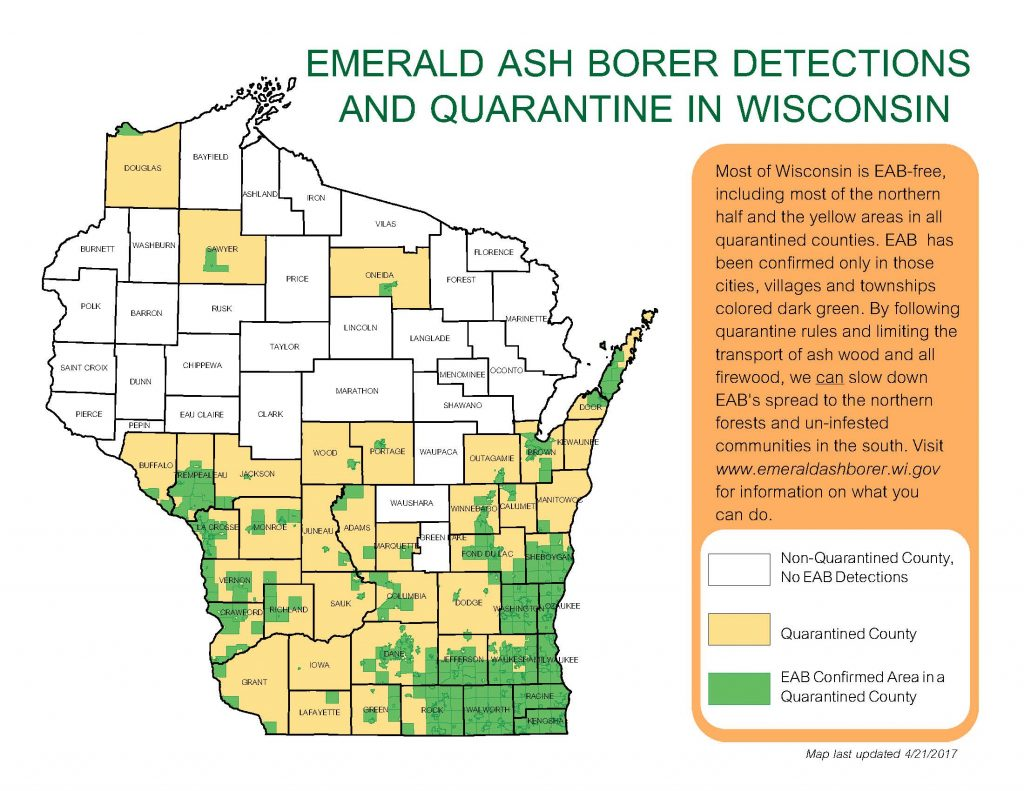 EAB quarantine map. Counties shaded in tan are quarantined for EAB, and include much of the southern half of Wisconsin, as well as other counties. Areas shaded in green are the townships and municipalities where EAB has actually been identified, and shows that not all counties that are quarantined are fully infested.
