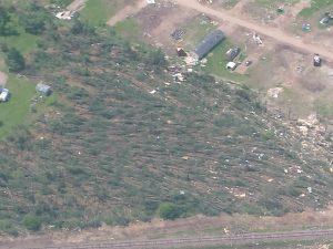 Blowndown red pine stand near the Chetek mobile home park.