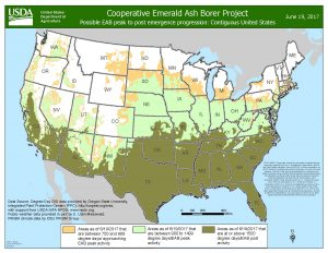 EAB peak emergence map. Tan color is approaching peak emergence, light green is peak emergence, and dark green is past peak EAB emergence. Map from June 19, 2017.