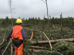 Blowdown on the Oneida County forest. Photo by Ricky Keller.