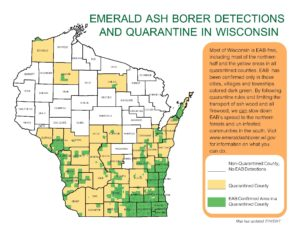 EAB quarantine map. Counties shaded in tan are quarantined for EAB, and include much of the southern half of Wisconsin, as well as other counties. Areas shaded in green are the townships and municipalities where EAB has actually been identified, and show that not all counties that are quarantined are fully infested.
