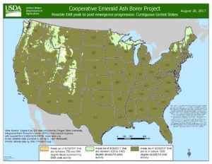EAB emergence map as of August 28, 2017. In the north the light green shows peak emergence, and olive is past peak emergence.
