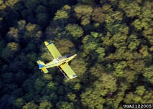 Aerial spraying of Btk for gypsy moths.