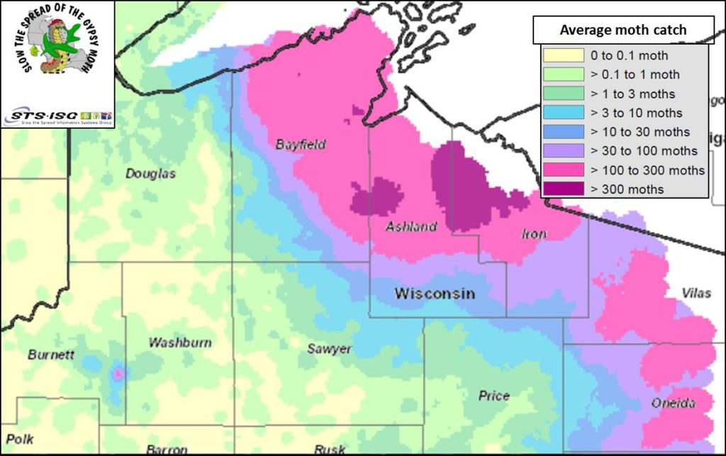 Fig 1. Average gypsy moth trap counts in northern Wisconsin counties. Map credit: Adapted, Slow The Spread Foundation, Inc.