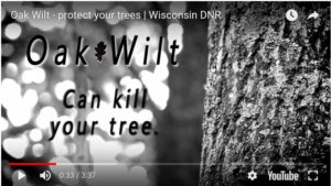Check out the new oak wilt video on the WI DNR Oak Wilt webpage.