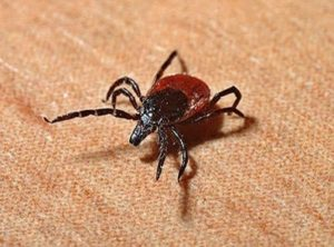 Ticks pose increasing health threats throughout North America