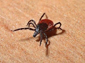 Ticks pose increasing health threats throughout North America