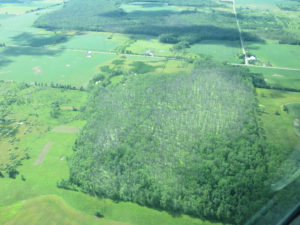 An aerial view of tree mortality in very wet areas. Photo: Bill McNee