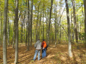 Forestry professional and landowner standing in hardwood stand assessing conditions.