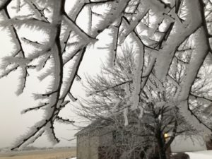 Tree branches covered in 1 inch of ice.