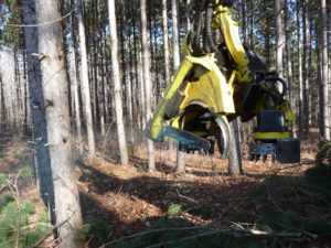 Cutting bar on logging equipment spraying blue chemical used in HRD stump treatments.