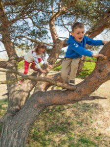 young boy and girl climbing in a pine tree on a sunny day