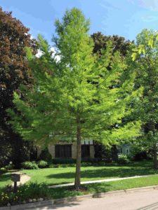 Tree seedling sales |