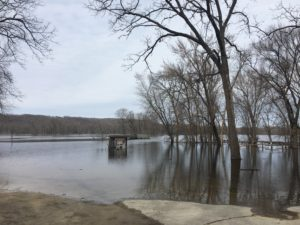 Trees being impacted by river flooding.