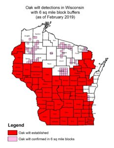 Distribution of oak wilt in Wisconsin showing sparse distribution in most northern counties.