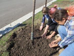 Planting community tree.