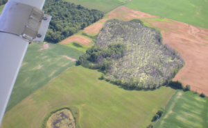 Heavy tree mortality in a lowland site where standing water was present on July 31. Surviving trees can be found on adjacent higher grounds. Credit: Bill McNee.
