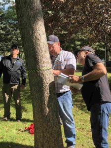 Collecting tree measurements at workshop