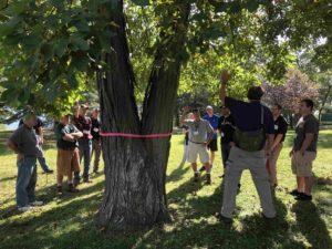 Discussing tree characteristics at workshop
