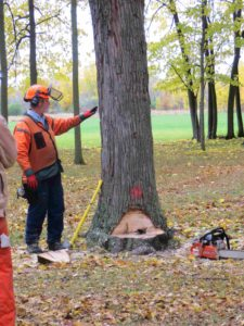 Chainsaw and tree felling demonstration