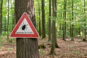 Forested setting with tree in foreground and sign attached to tree that says beware of ticks.