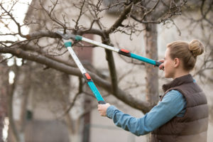 Woman pruning a tree with no leaves on it.