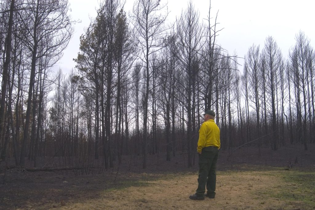 Wildland FIrefighter, Scott Lancaster, looks at the burnt woods after the Cottonville Fire.