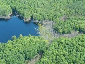 Photo of flooded lakeside forest and dead trees around margin of lake.
