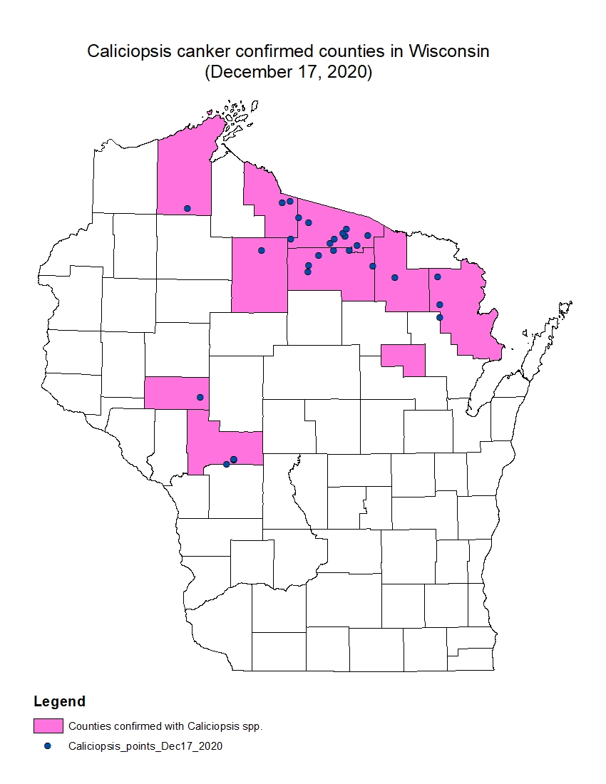 A map of Wisconsin, showing the confirmed locations of Caliciopsis in the state.